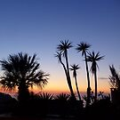Majorcan Palms At Sunset by Fara