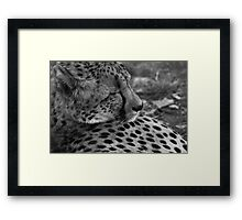 The Sleeping Cheetah Framed Print