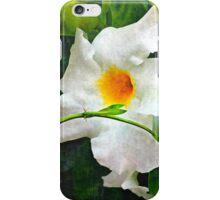 White Mandevilla II iPhone Case/Skin
