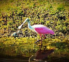 Roseate Spoonbill by alan barbour
