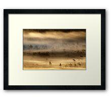14.8.2015: Summer Morning in Torronsuo National Park IV Framed Print