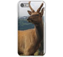 Young Stag iPhone Case/Skin