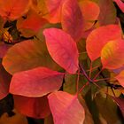 Leaves by Bette Devine