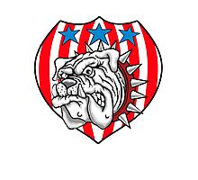 red white bulldog Photographic Print