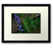 Blue Flowers, Fern, Rock Framed Print
