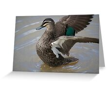 Duck Display B Greeting Card