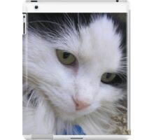 Close up of Black & White Cat iPad Case/Skin
