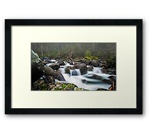 Branches in the Mist Framed Print