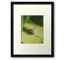 Monarch Caterpiller-Munching Framed Print