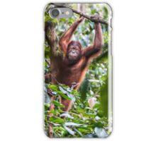 Urangutan - Borneo iPhone Case/Skin