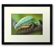 To Be a Monarch Framed Print