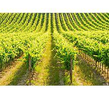 Tuscany, Chianti vineyards Photographic Print