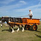 Horse and Cart 2 by Vicki Spindler (VHS Photography)