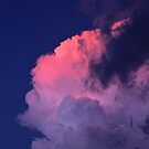 Way Up High, With  Pretty Pink Clouds In The Sky   by NatureGreeting Cards ©ccwri