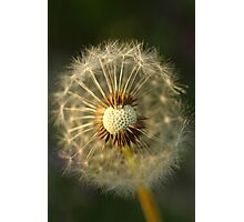 Broken Dandelion At Sunset Photographic Print