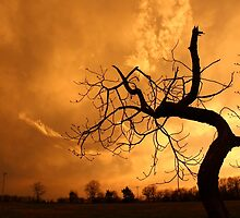 Tree Dancing In The Sunset by StonedOgraphy