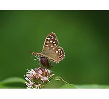 Speckled Wood Butterfly at Gwithian Nature Reserve in Cornwall. Photographic Print