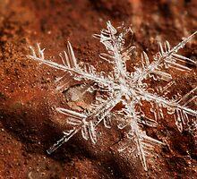 Snowflake On Mars by Dan Dexter