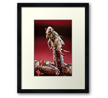 House Fly Hatching Framed Print