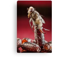 House Fly Hatching Canvas Print