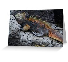 Large Marine Iguana Greeting Card