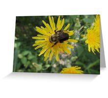 Bee on Flower Macro Greeting Card