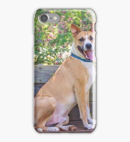 Basenji Mix Dog iPhone Case/Skin
