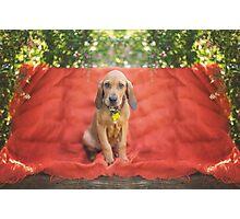Hound Puppy Portrait Photographic Print