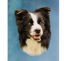 Border Collie Dog Pet Water Color Art Painting Photographic Print