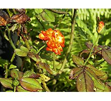 Rose of Fire Photographic Print