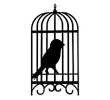 Black Caged Bird Photographic Print