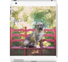 Wire Haired Dog on Red Bench iPad Case/Skin