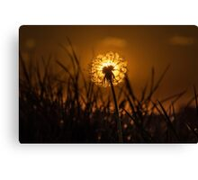 Dandelion dawn, UK Canvas Print