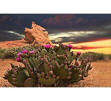 CACTUS PLANT @ VALLEY OF FIRE LAS VEGAS  Photographic Print