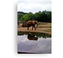 Elephant and reflection Canvas Print