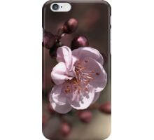 Soft as Blossom iPhone Case/Skin