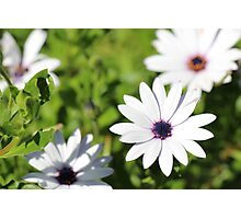 White Flower Upon Green Grass Photographic Print