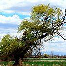 Green Wind by Diane Arndt
