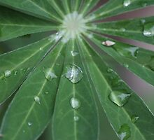 Leaf with raindrops by RosiLorz