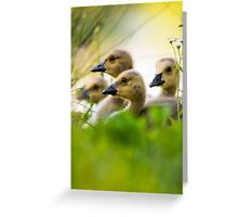Nesting Together Greeting Card