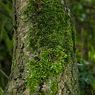 Moss on a tree by Sarah Horsman