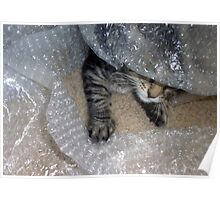 Mikino - Burrowing in Bubble-Wrap Poster