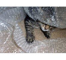 Mikino - Burrowing in Bubble-Wrap Photographic Print