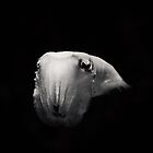 Portrait: Cuttlefish by the-novice