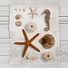 Beach treasures by artsandsoul
