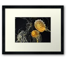 Stunning Jelly Fish Framed Print