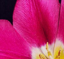 Spring Time Tulip Sticker