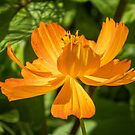 Summer flower by 29Breizh33