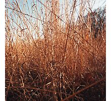 Autumn Grass Photographic Print