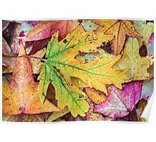 Intensely Colorful Fall Foliage Poster